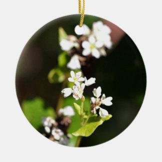 Blumen einer Buchweizen-Pflanze (Fagopyrum essbar Rundes Keramik Ornament