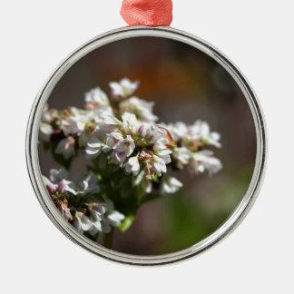 Blumen einer Buchweizen-Pflanze (Fagopyrum essbar Rundes Silberfarbenes Ornament