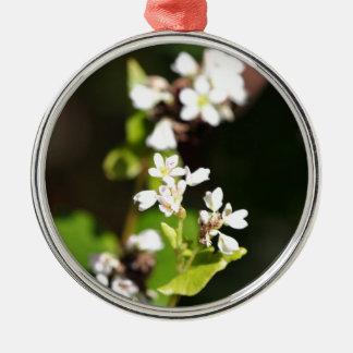 Blumen einer Buchweizen-Pflanze (Fagopyrum essbar Silbernes Ornament