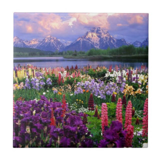 Blumen-Feld Kleine Quadratische Fliese