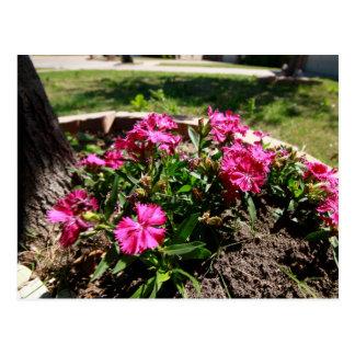 Blumen im Schatten Postkarte