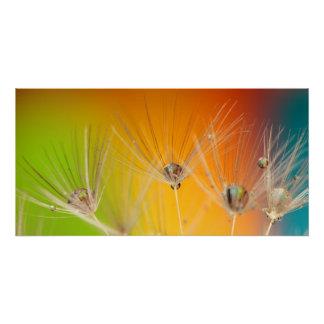 Blumen-Löwenzahn-Polterabend-Liebe-Frieden Poster
