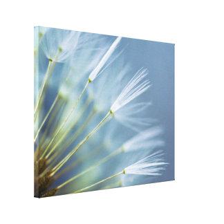 Blumen-Löwenzahn-Samen-Kopf Leinwanddruck