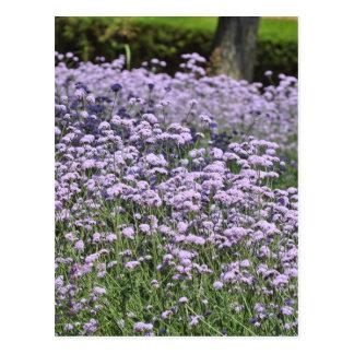 Blumen Postkarte