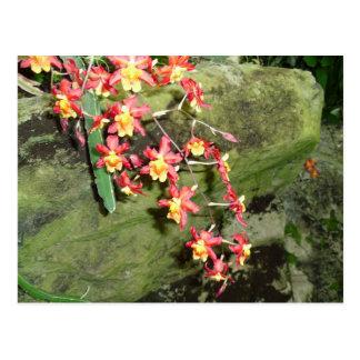 Blumenfälle Postkarte