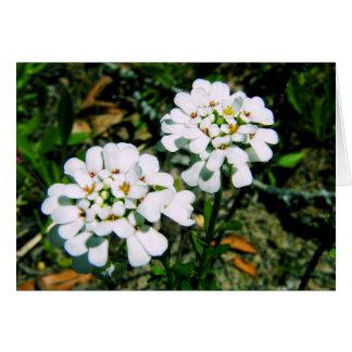 Blumengruß-Karten-Reihe - weiße Ringelblume Karte