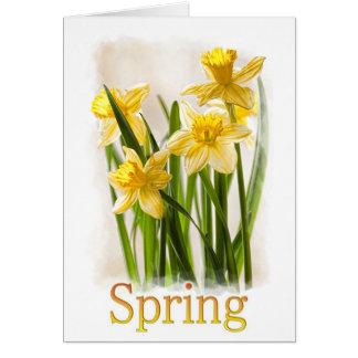 Blumenphotographie:  Gelbe Frühlings-Narzissen Karte