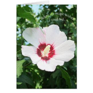 Blumensommer-Blumen-Rose von Sharon erhalten wohle Grußkarte