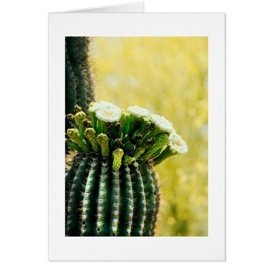 Blüte eines Saguaro Grußkarte