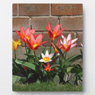 Blüte Fotoplatte