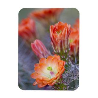 Blüte in der Orange Magnet
