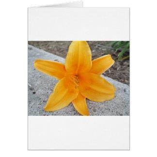 Blüte Karte
