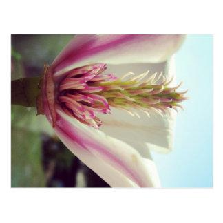 Blüte Postkarte