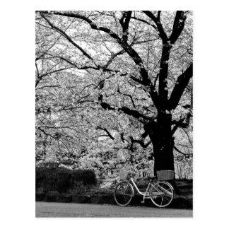 Blüte u. Fahrrad: Japan Postkarte