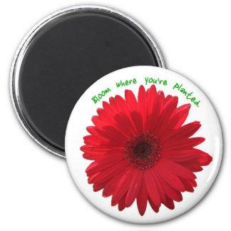 Blüte, wo Sie gepflanzter Magnet sind