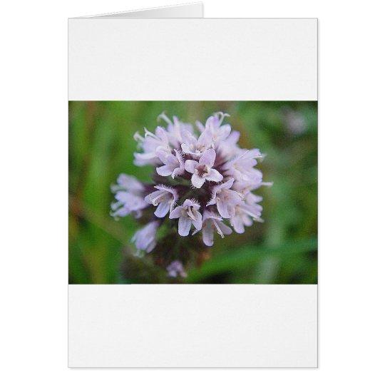 Blütenkugel mit zarten lila Blüten Karte