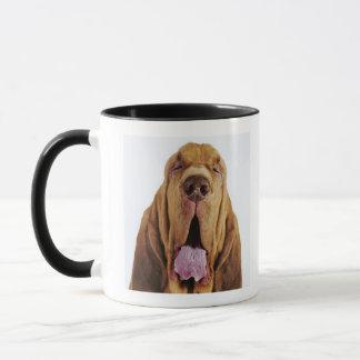 Bluthund (Jagdhund St. Hubert) mit geschlossenen Tasse