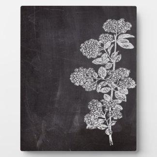 Böhmische schicke französische Landtafel botanisch Fotoplatte