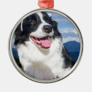 Border-Collie Silbernes Ornament