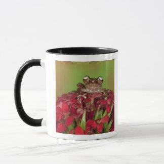 Borneo. Nahaufnahme des Zimt-Baum-Frosches auf Rot Tasse