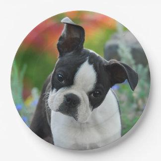 Boston-Terrier-Hundewelpen-Porträt, glückliches Pappteller