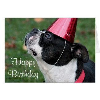 Boston-Terrier mit einem Geburtstagswunsch Grußkarte