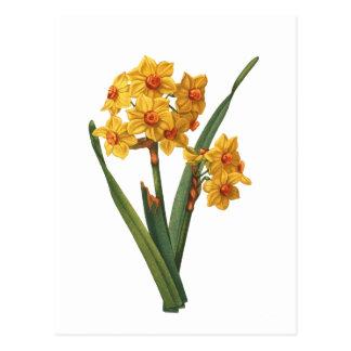 Botanische gelbe Narzisse Postkarte