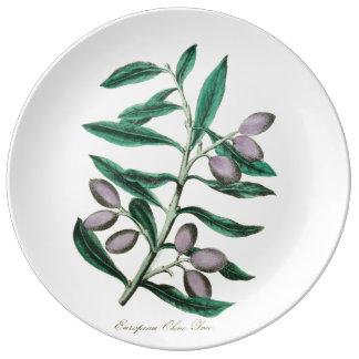 Botanische Illustration: Europäische Olive, 1855 Teller Aus Porzellan