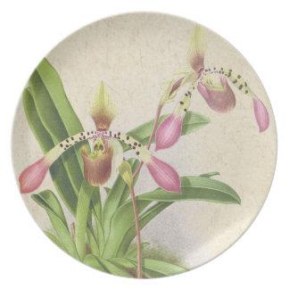 Botanische Ladys Pantoffel-Orchideen-Blumen mit Teller