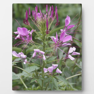 Botanische Reihe Fotoplatte
