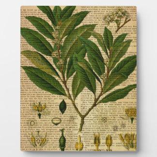 Botanischer Druck auf Seite des alten Buches Fotoplatte