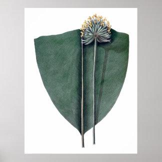 Botanischer Druck des tropischen großen Blätter Poster