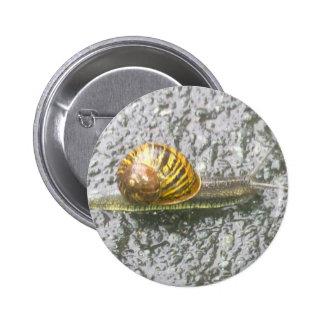 Bouton rayé d'escargot badge rond 5 cm