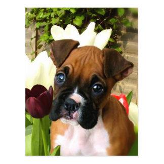 Boxerwelpe in den Tulpen Postkarte