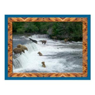 Braunbären, die Postkarte fischen
