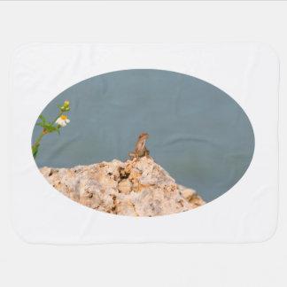 braunes anole auf holey Felsen mit Blumeneidechse Kinderwagendecke
