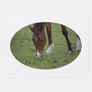 braunes PferdeWeideland equine.JPG Babydecke