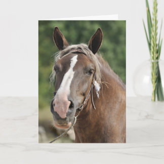 Breton draft horse birthday