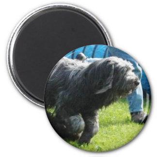 Briard Runder Magnet 5,1 Cm