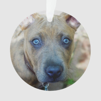 Brindle Pitbull-Welpe durch Shirley Taylor Ornament