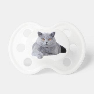 Britische shorthair Katze Schnuller