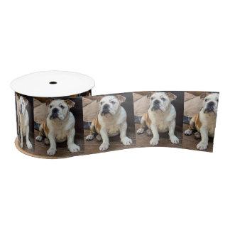 Britischer Bulldoggenwelpe Satinband