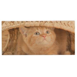 Britisches Kätzchen, das heraus von unterhalb Holz USB Stick