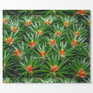Bromeliad Pflanzen-Verpackungspapier Geschenkpapier