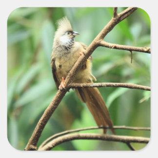 Brown curieux mignon Mousebird Colius Striat Sticker Carré