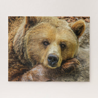 Brown-Grizzlybär-Puzzle