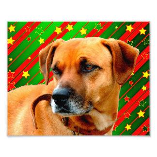 Brown-Hundesterne rotes Gelbgrün-Weihnachten Photos