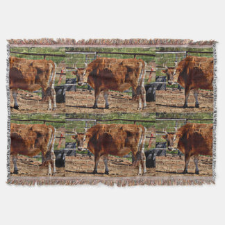 Brown-Kuh in der Ziegelstein-Wurfs-Decke Decke