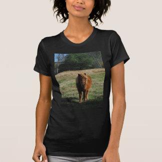 Brown-Miniaturpferd T-Shirt