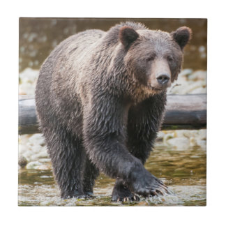 Brown-oder des Grizzlybär-(Ursus Arctos) Fischerei Fliese